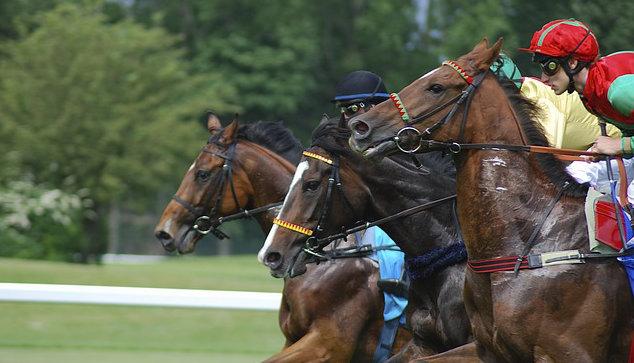 Horse racing Dubai